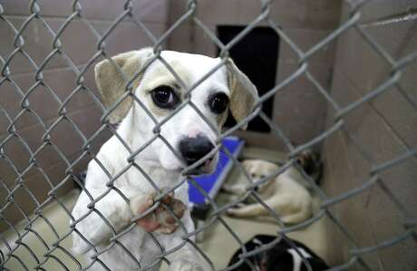 Giving animals away or offering them for free is like handing them over to abusers on a silver platter. That's why, if you must part with an animal, it's vital to charge a reasonable fee and take every precaution to ensure that the adopter is reputable.