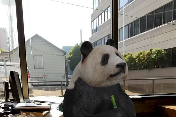 A giant panda on a chair, as seen through Google AR.