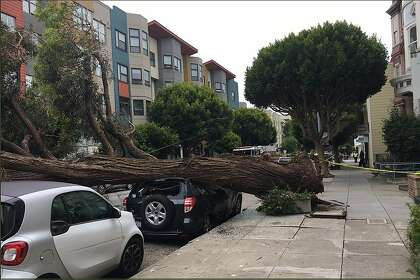 Huge SF tree topples, crushes vehicle on Sutter Street