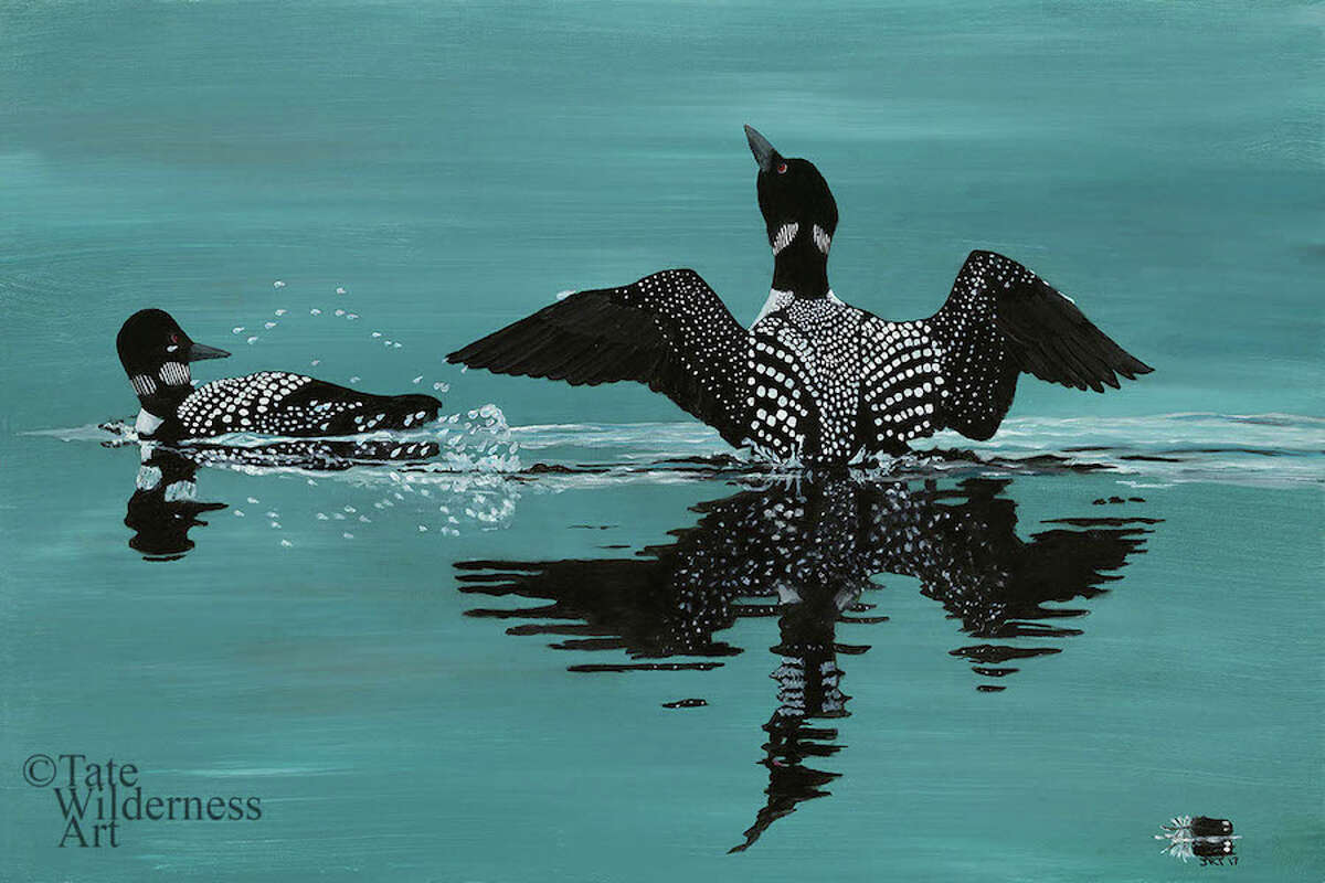Showing off is an image of loon that kickstarted John Tate's painting career.