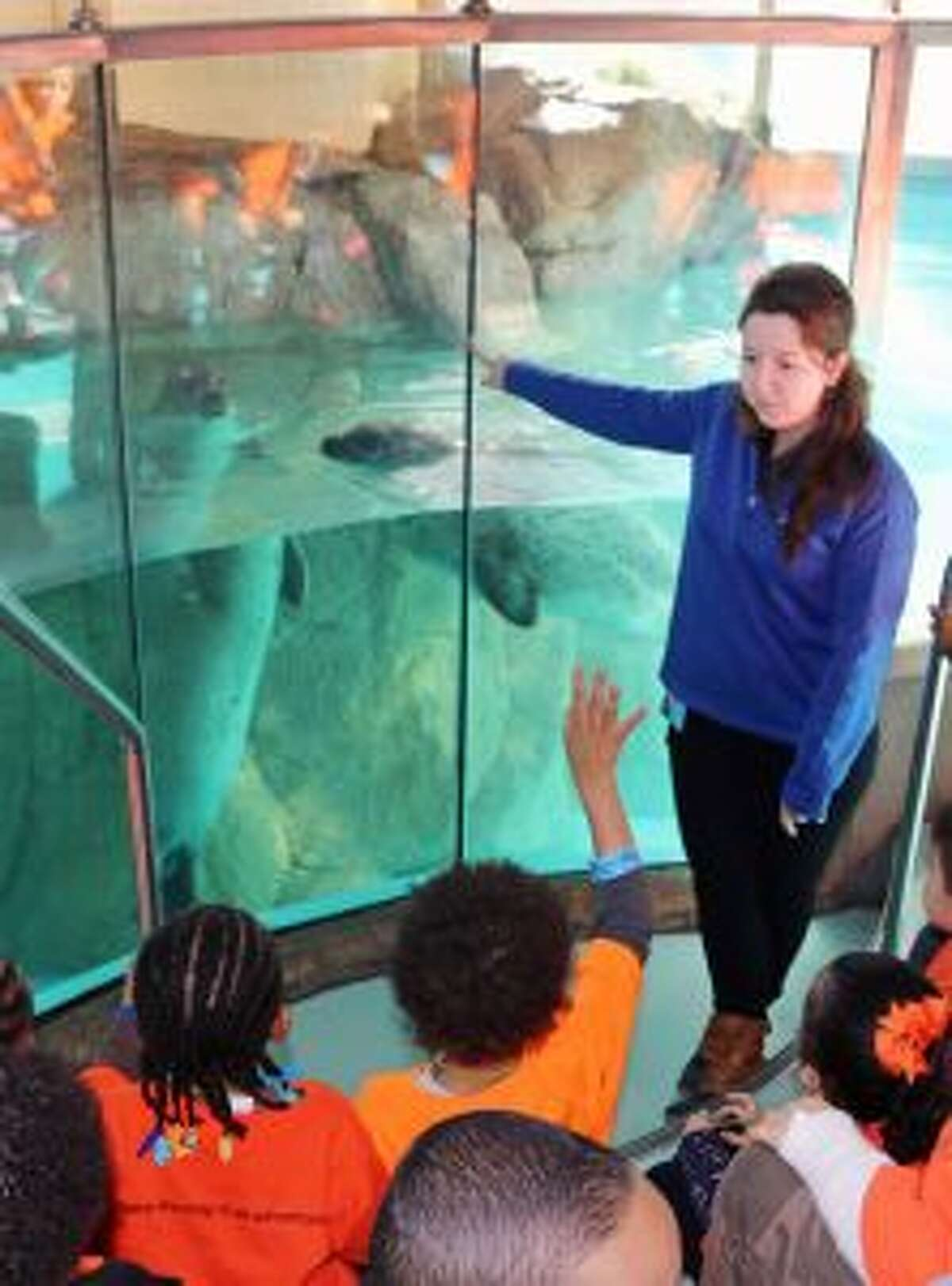 Maritime Aquarium educator Lauren Magliola directs observations about the harbor seals with young students during a school field trip.
