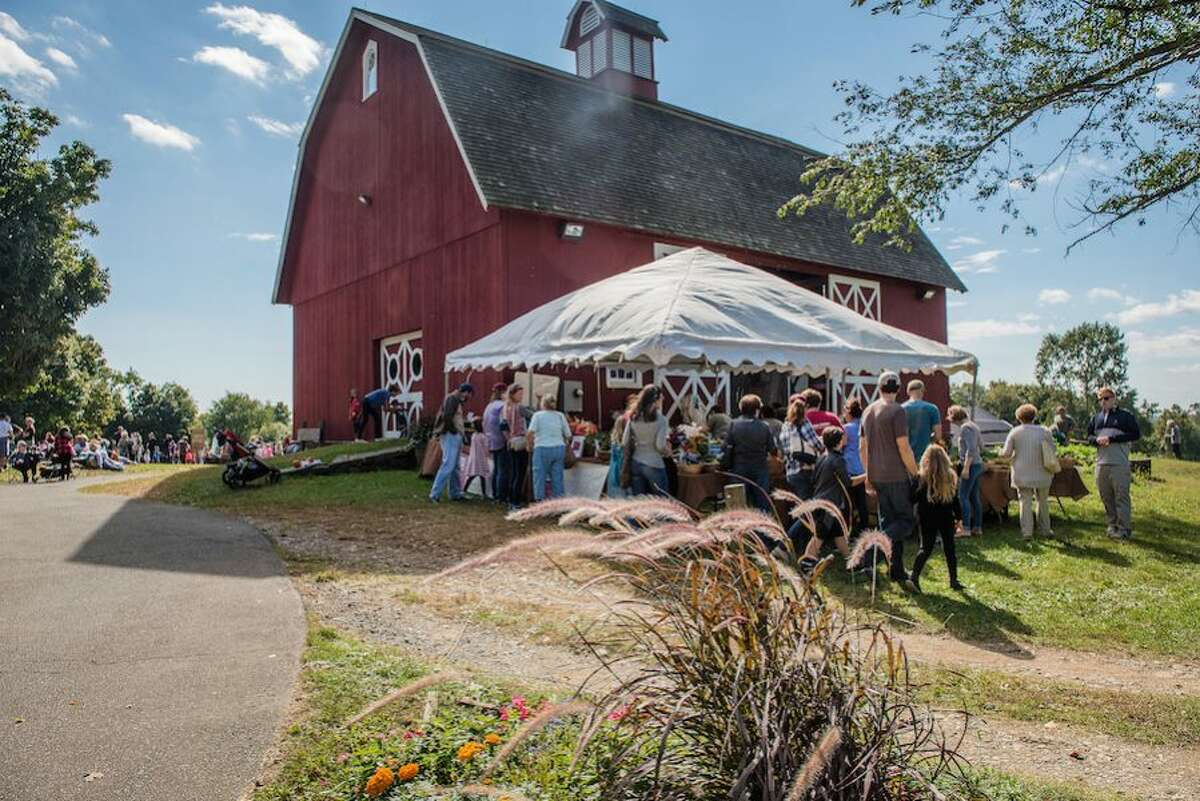 wilt Ambler Farm Day-9