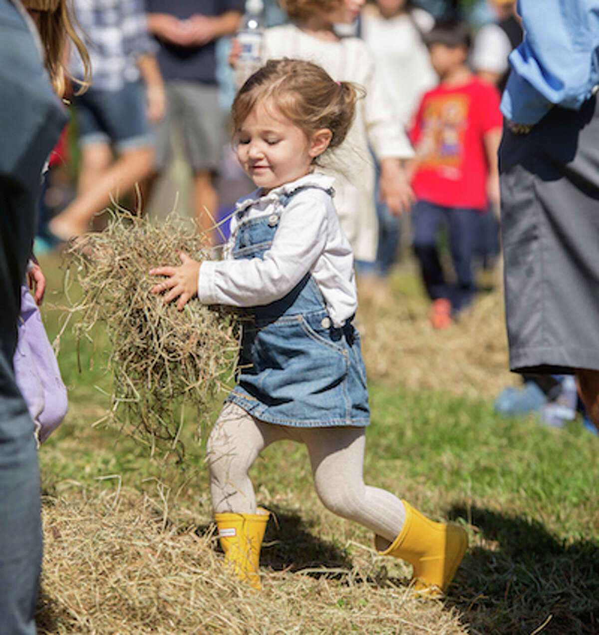wilt Ambler Farm Day-1