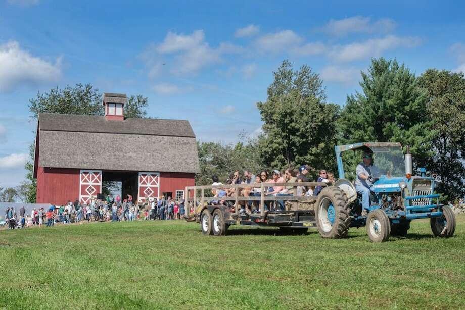Ambler Farm Day is one of Ambler's biggest annual events. — Bryan Haeffele/Hearst Connecticut Media