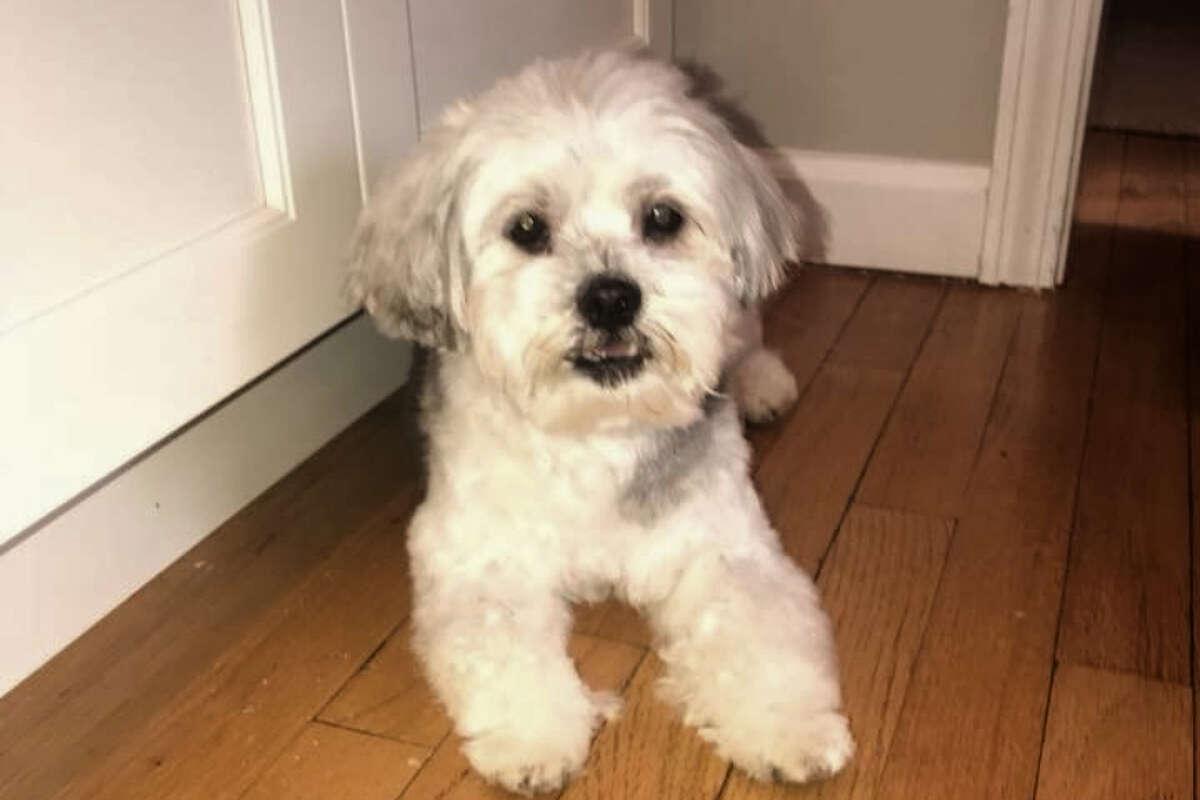 wilt missing dog lost pet roscoe 2018 FI
