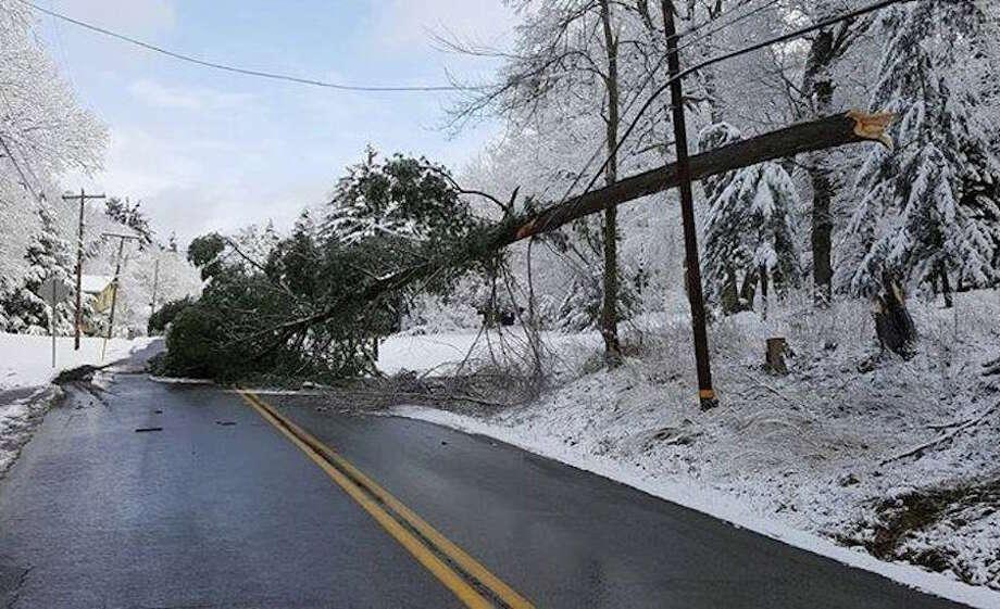 A tree lies across Dudley Road. — Tina Pamnani photo
