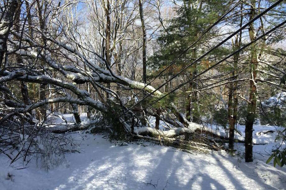 This is a view of Andrew Lishnoff's driveway on Old Wagon Road, where a tree fell on power lines.