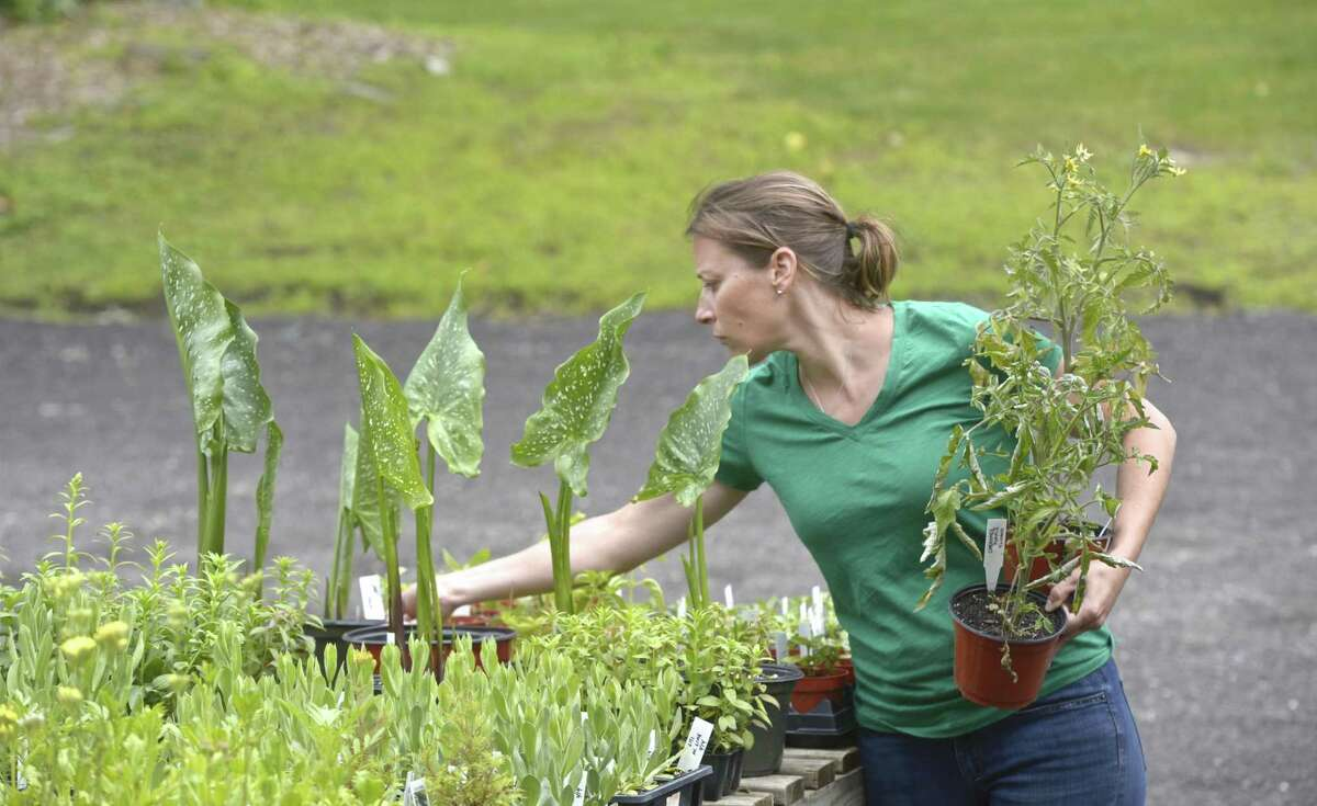 Stephanie Sweeney arranges plants at Holbrook Farm in Bethel. The owners of Taproot restaurant in Bethel and Redding Roadhouse are leasing the Farm. Friday, June 14, 2019, in Bethel, Conn.