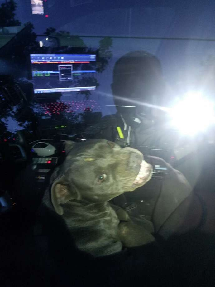 "A pitbull reportedly ""hijacked"" a Kilgore police officer's patrol car over the weekend, after the officer left the driver door open during an animal control call. Photo: Kilgore Police Department"