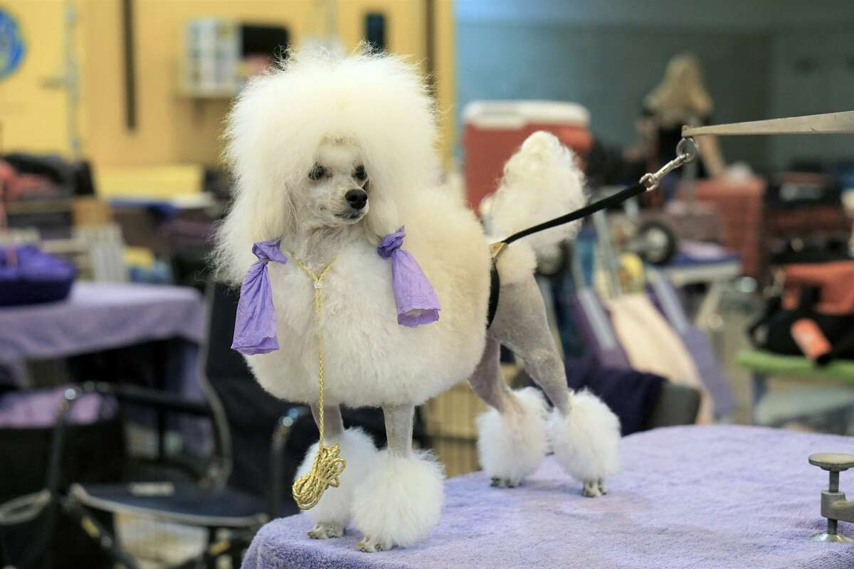 Check out the dogs at the Houston World Series of Dog Shows, which took place at the NRG Center from July 17 through July 21.