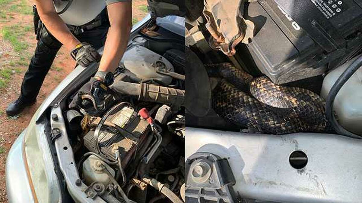 A 5-foot-long, nonvenomous black rat snake was found in an Oklahoma resident's car engine, according to the Cleveland County Sheriff's Office.