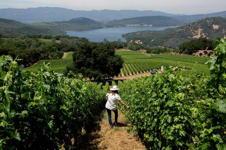 Winemaker Kathryn Carothers walks through a vineyard at the picturesque Bryant Estate winery in St. Helena. Photo: Santiago Mejia / The Chronicle