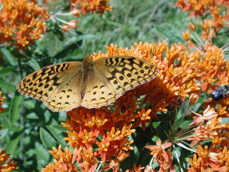Butterfly #1(2)