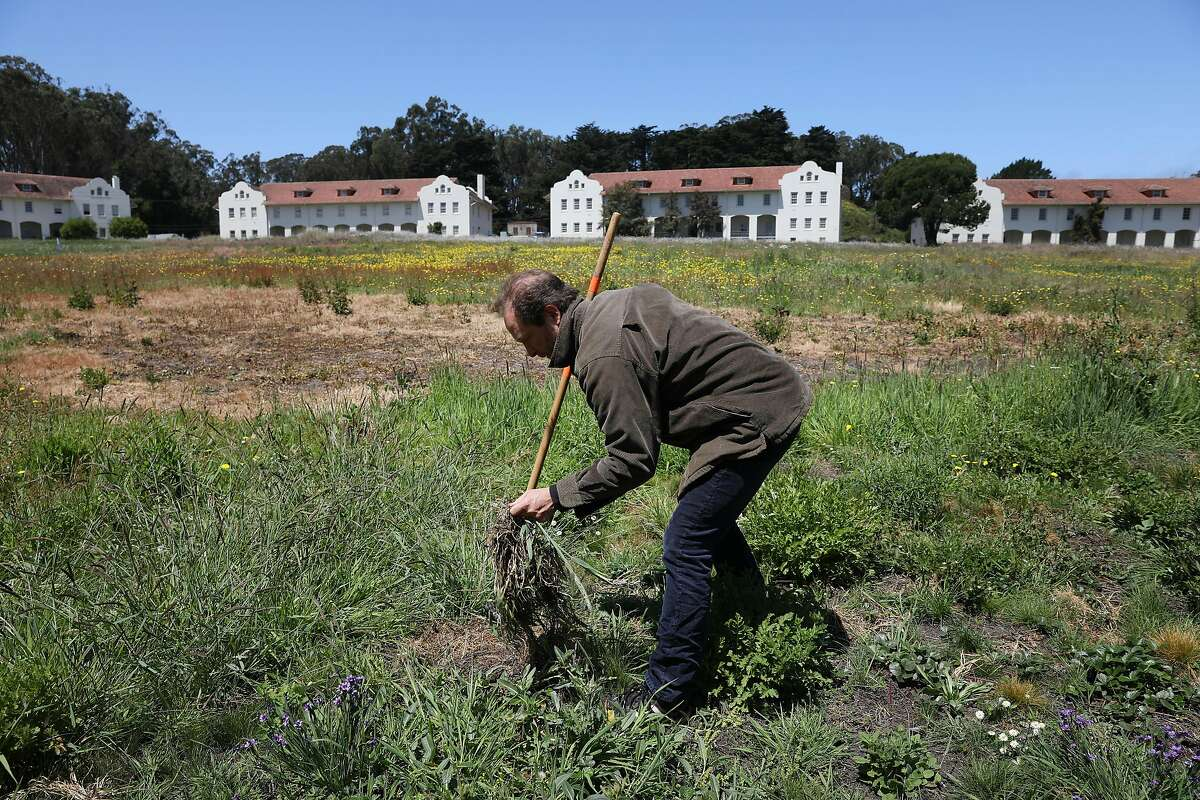 Lew Stringer, Presidio Trust associate director of natural resources, works in the Fort Scott parade grounds in an area where invasive species are being removed and flowering native plants are being planted on Monday, June 17, 2019 in San Francisco, Calif.