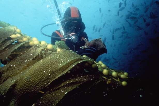 A scuba diver at Santa Catalina Island