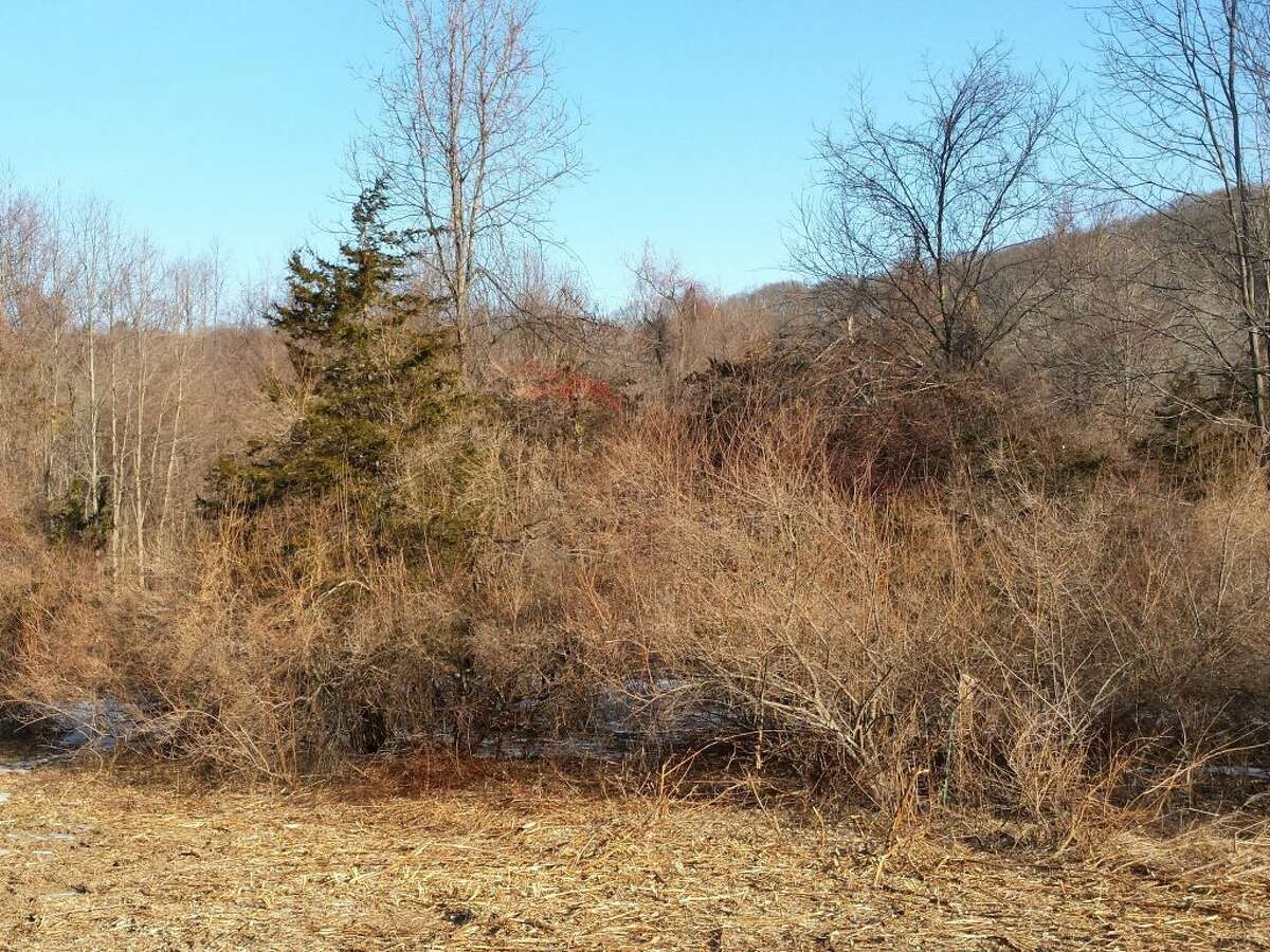A before and after look at the meadow around Lake Windwing that the Ridgefield Conservation Commission and Parks and Recreation united to repair.