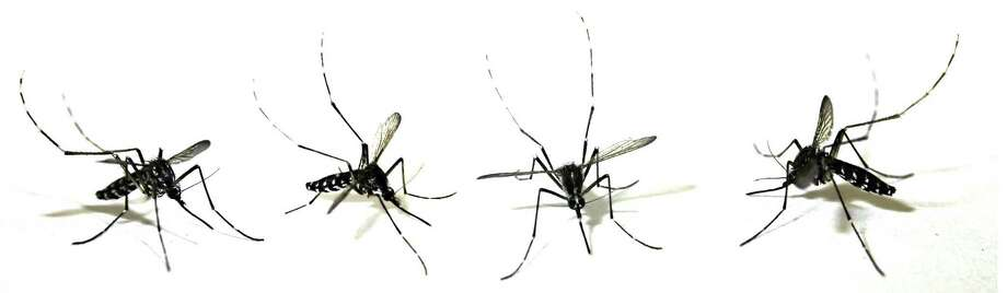 The Connecticut Department of Public Health is urging residents to take precautions to avoid mosquito bites and reduce the chance of contracting Eastern Equine Encephalitis virus. Photo: / FOTOLIA.COM / handout / stock agency