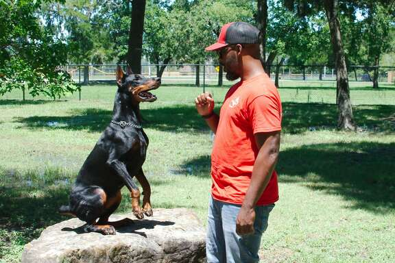 """Mobile dog trainer Mark Cousins and """"Cali"""" run through command and response training exercises at Bay Area Dog Park Thursday, Jun. 6."""