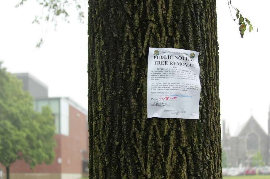The tree department of the town of Greenwich has posted more than a dozen trees at Hamilton Avenue School. They could be removed for the project to level the playing field, a long overdue project that advocates say would make the field safer. Photo: Jo Kroeker / Hearst Media