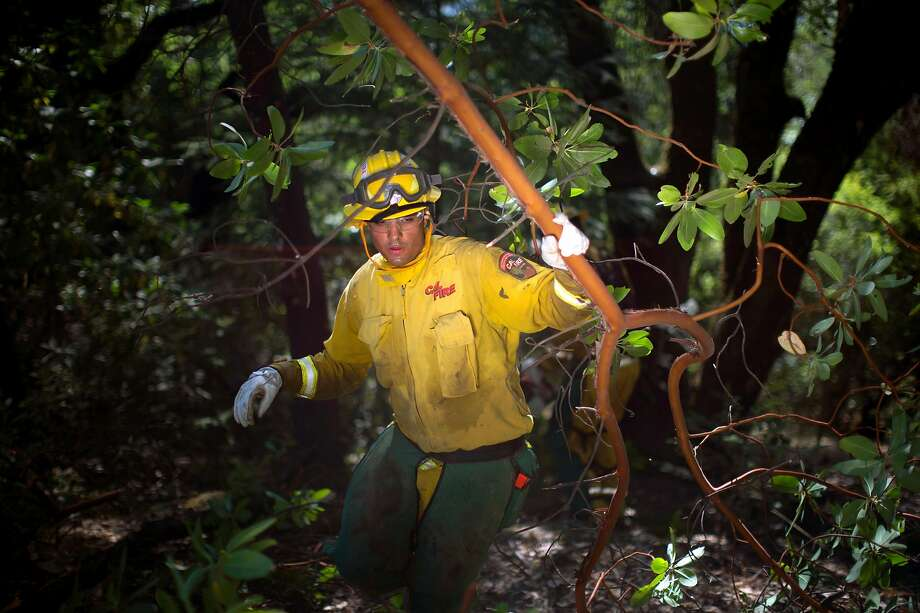 Daniel Samaniego of Cal Fire works in Ukiah on fuel-thinning by removing shrubs, weeds and trees that could feed a wildfire. Photo: Justin Maxon / Special To The Chronicle 2018