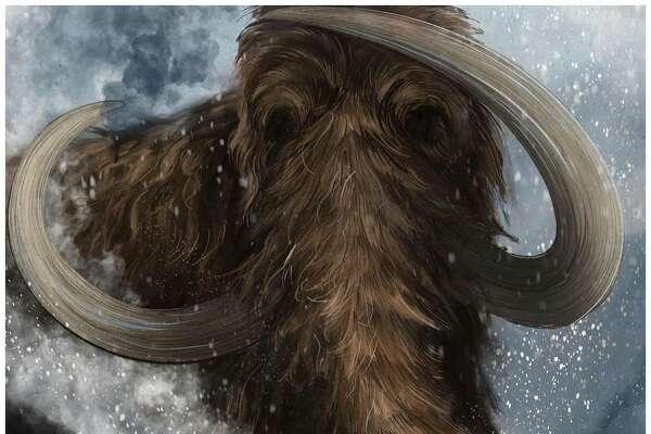 Will the woolly mammoth walk again?