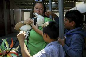"""Las Americas Newcomer School social worker Sarah Howell, center, holds Nieve the rabbit for Quilber Gonzalez, 12, and Christopher Tomin Ramos, 10, to pet at the butterfly garden Thursday, June 13, 2019, in Houston. The """"trauma garden"""" and Nieve help students with PTSD and other mental health concerns to transition back into school life."""