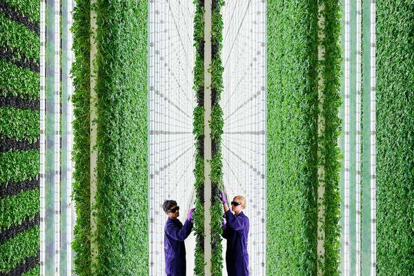 With huge new vertical farm, Plenty's produce could hit more shelves