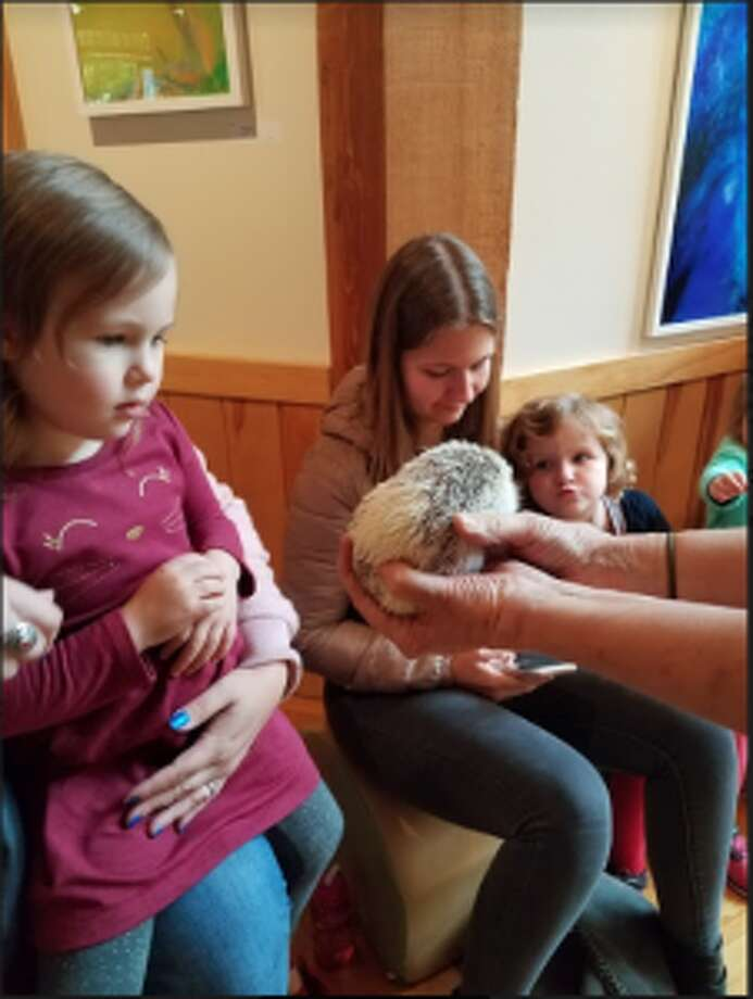Children got to hold, pet and learn all about hedgehogs at the Darien Nature Center's Tuesday Animal Meet & Greet with Molly. — Sandra Diamond Fox photo