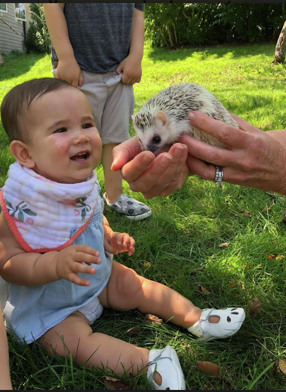 A visitor at the Darien Nature Center gets acquainted with its newest resident.
