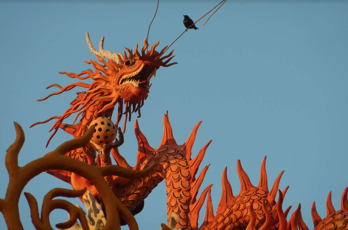 "The photograph ""Dragon and bird, Borneo"" by Steve Watson."