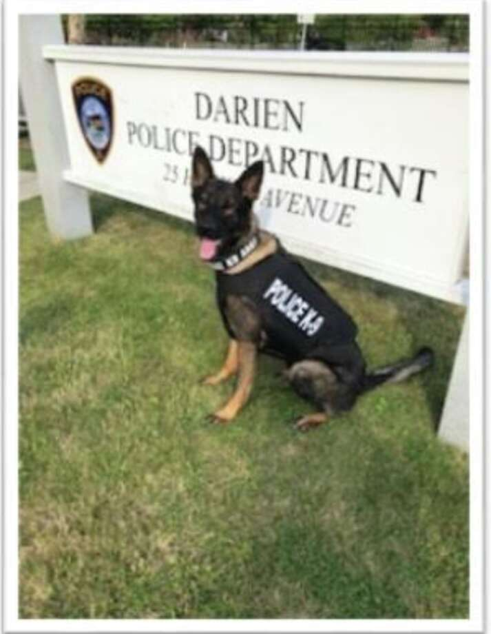 Darien Police's K-9 Argo recently received a donation of body armor.