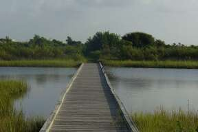 TRAVEL Galveston Travel 091607 11 - A bird sits on the boardwalk on the Clapper Rail Trail in Galveston Island State Park. Photo by Noelia Santos, Staff 081807
