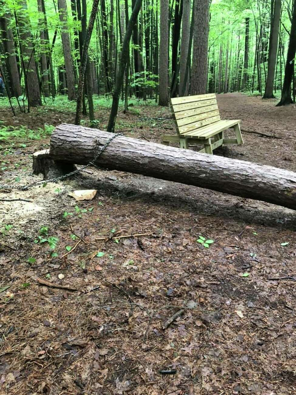 BOCES Environmental Conservation and Forestry workers remove dead or dangerous trees from Kinns Road Park. A falling tree was removed near the recently-installed bench, part of an Eagle Scout project.