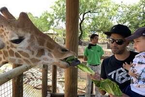 The zoo shared pictures with mySA showing the four-time NBA Champion and his sons meeting and feeding different animals on Tuesday.