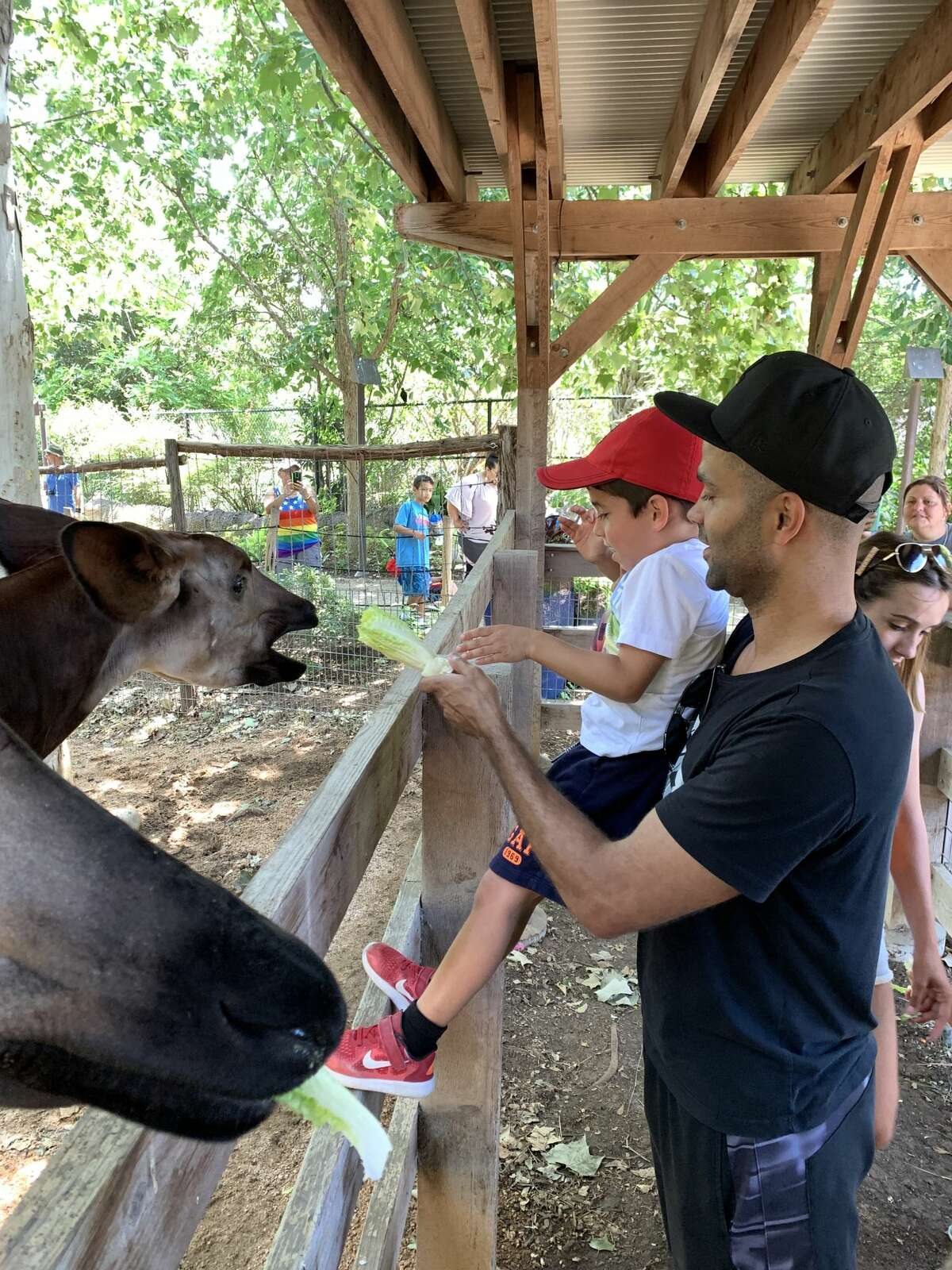 The zoo shared pictures with mySA showing four-time NBA Champion Tony Parker and his sons meeting and feeding different animals on Tuesday.