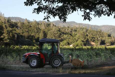 Vincent Toffanelli rides his tractor at his carbono vineyard at the end of the day on Thursday, June 6, 2019 in Calistoga, Calif. Photo: Liz Hafalia / The Chronicle