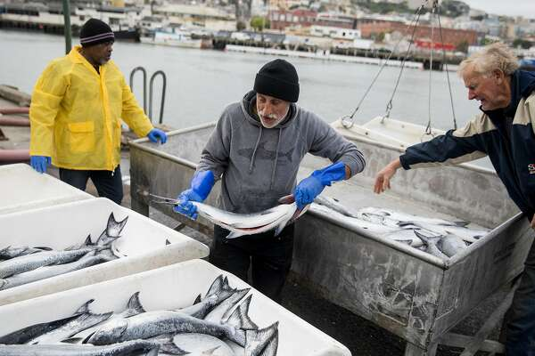 California fishermen report the biggest salmon season in a