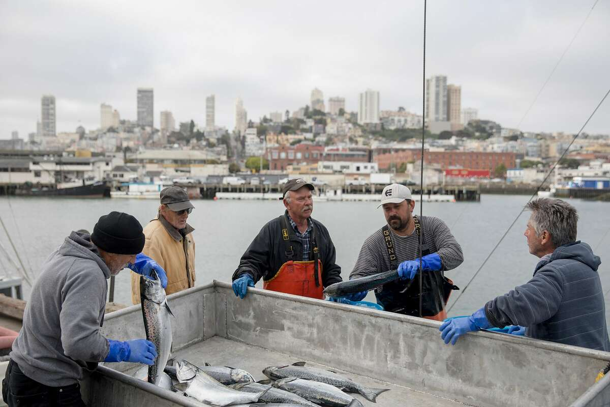 Fish processor Mark Adams (left), Sunlight boat captain Russell Miller (center), deck hand Rueben Quillen (second right), and fish buyer Joe Garofolo work through a haul of salmon from the Sunlight fishing boat out of Eureka while on the dock of Pier 45 at Fisherman's Wharf in San Francisco, Calif. Friday, June 21, 2019.