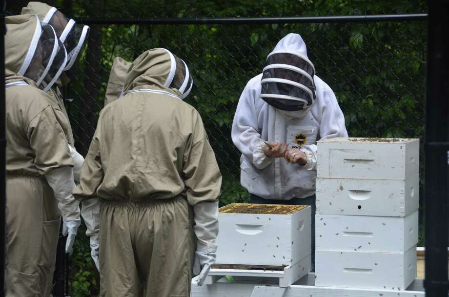 Beekeeper Ben Hurd of Middlebury leads Subway employees in a lesson in beekeeping June 19, 2019 at Subway headquarters in Milford, Conn. Photo: Jill Dion / Hearst Connecticut Media