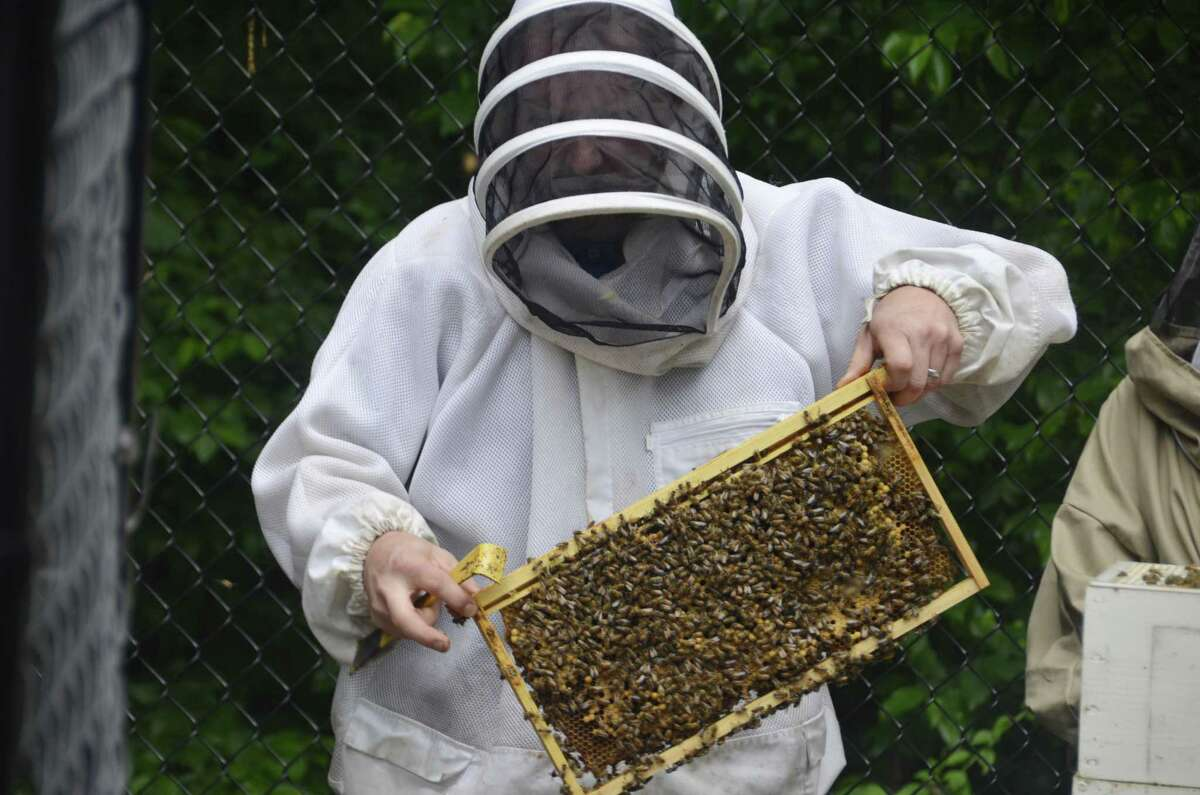 Beekeeper Ben Hurd of Middlebury leads Subway employees in a lesson in beekeeping June 19, 2019, at Subway headquarters in Milford, Conn.