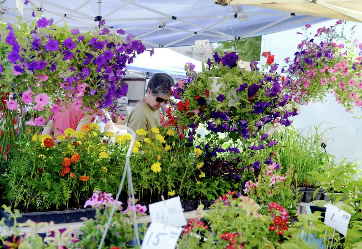 Flowers on display at the Schenectady Greenmarket on Sunday, June 23, 2019, in Schenectady, N.Y. (Catherine Rafferty/Times Union)
