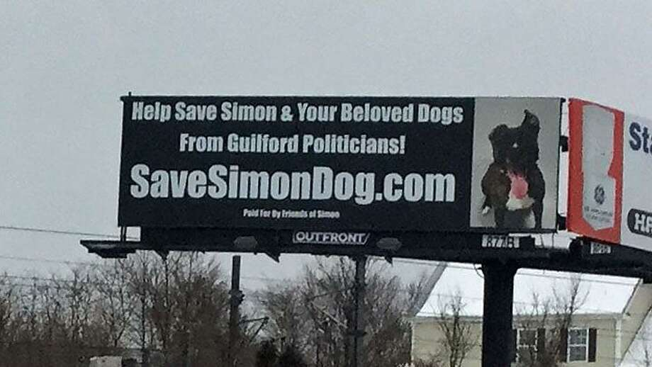Simon the dog who was featured on a Guilford billboard has found a home in Michigan. Photo: Jack Kramer / CTNewsJunkie.com