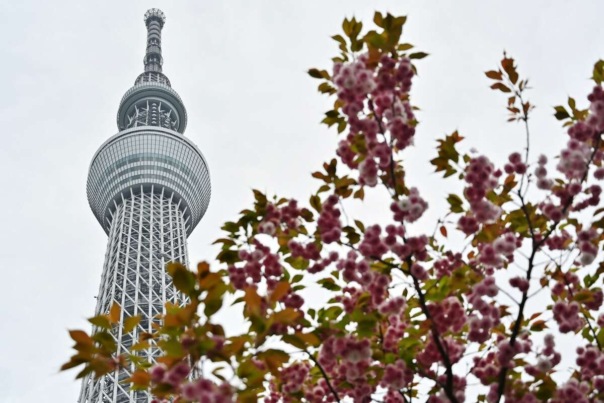 Click ahead to see the cheapest international getaways from SFO, SJC and OAK San Francisco International Airport Destination: Tokyo Carrier:American Airlines Best price:$569 (roundtrip)