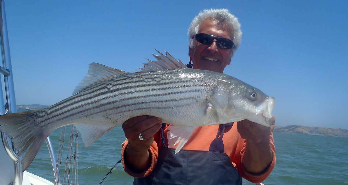 Armand Castagna with striped bass he caught on San Francisco Bay