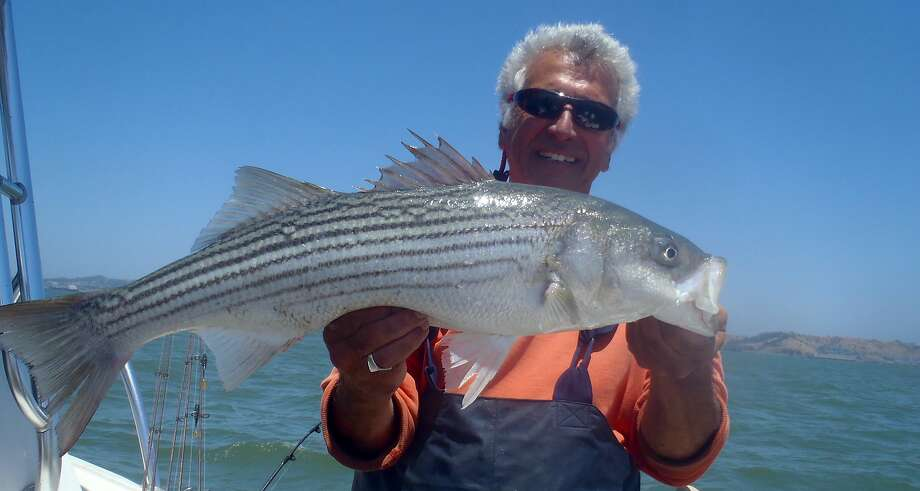 Armand Castagna with striped bass he caught on San Francisco Bay. Photo: Executive Fishing Charters