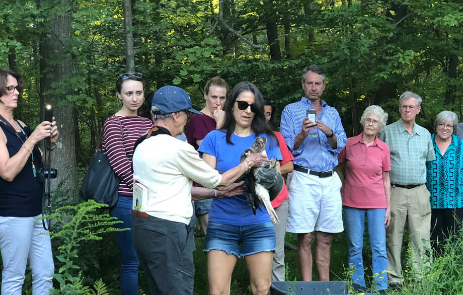 A hawk is released following its rehabilitation. — Contributed photo