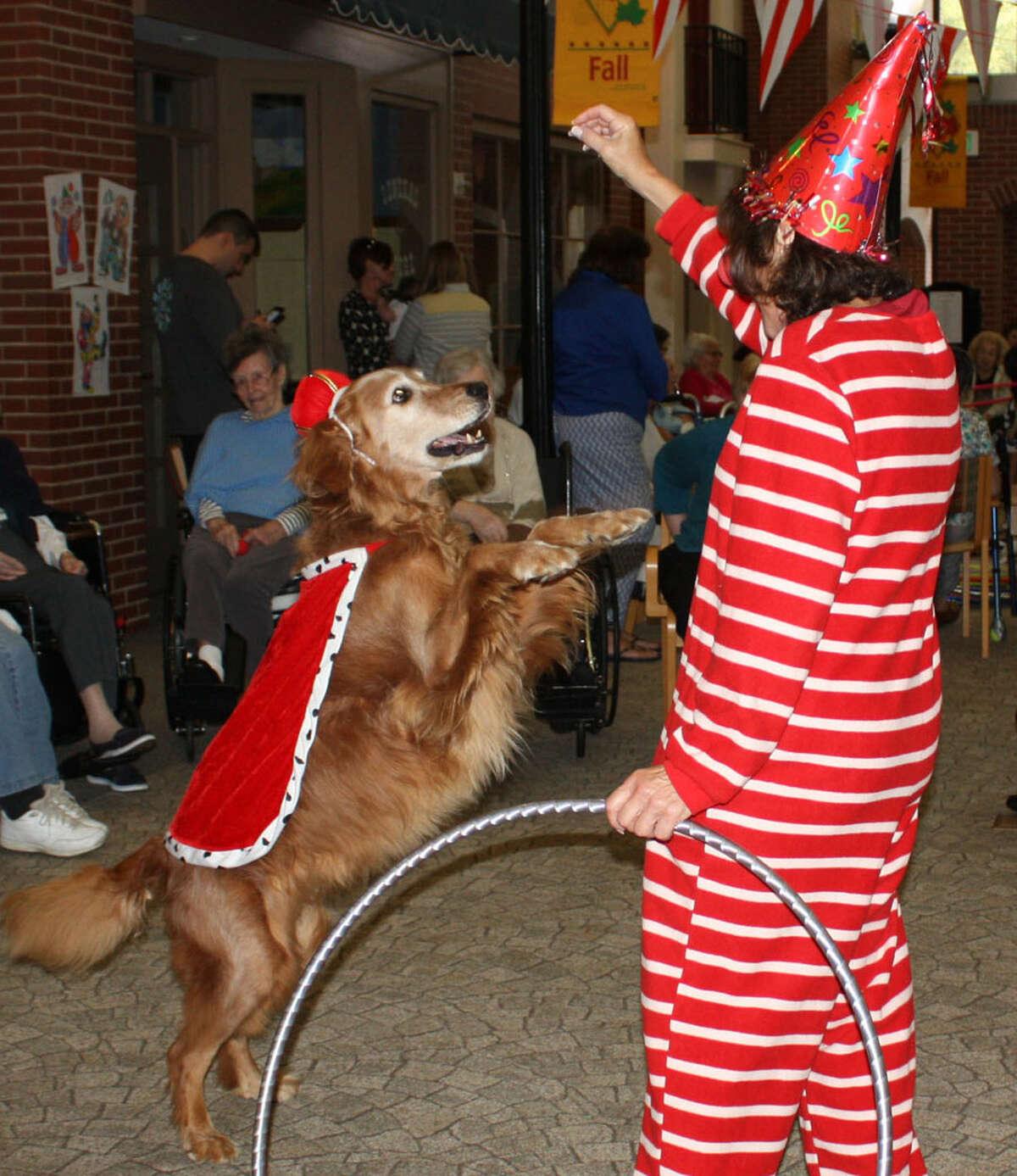 Waveny's therapy dog Meca plays