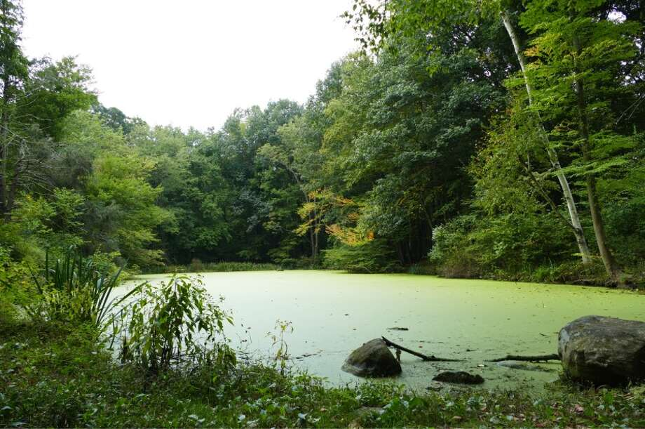 The Waveny Pond is covered with green algae now, but after dredging the water is expected to flow and not be stagnant. — Grace Duffield photo