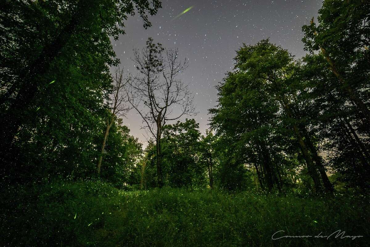 Tiny lights of fireflies are within the grass and to the tops of the trees. Look carefully in the grass and among the trees. - Contributed photo by Connor deMayo