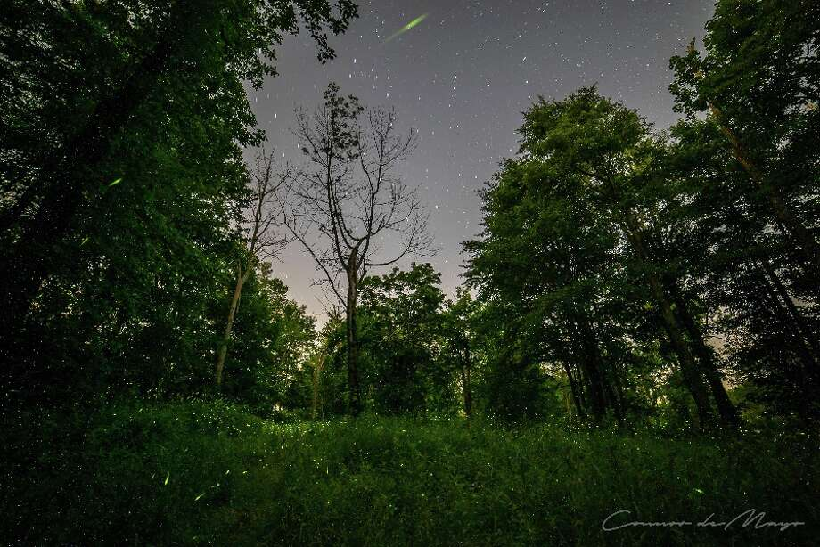 Tiny lights of fireflies are within the grass and to the tops of the trees. Look carefully in the grass and among the trees. — Contributed photo by Connor deMayo